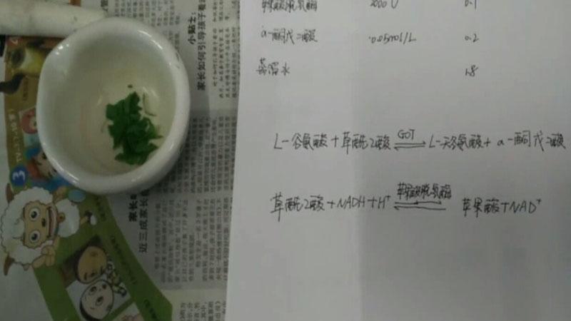 GOT法提取与测定转氨酶