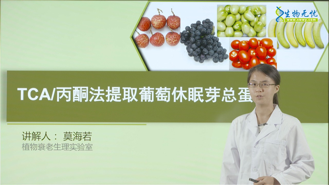 莫海若:TCA/酮法提取在葡萄休眠芽总蛋白