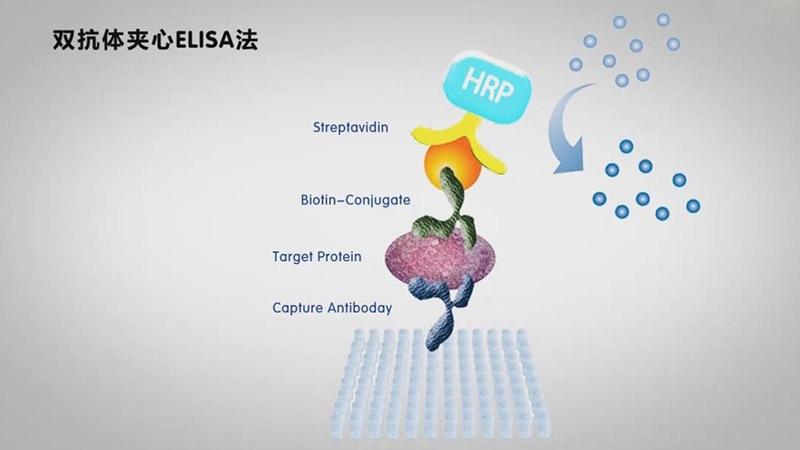 酶联免疫吸附测定(ELISA)视频
