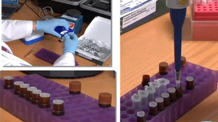 野外禽流感病毒的快速诊断:利用便携式RT-PCR和野外干冻试剂视频