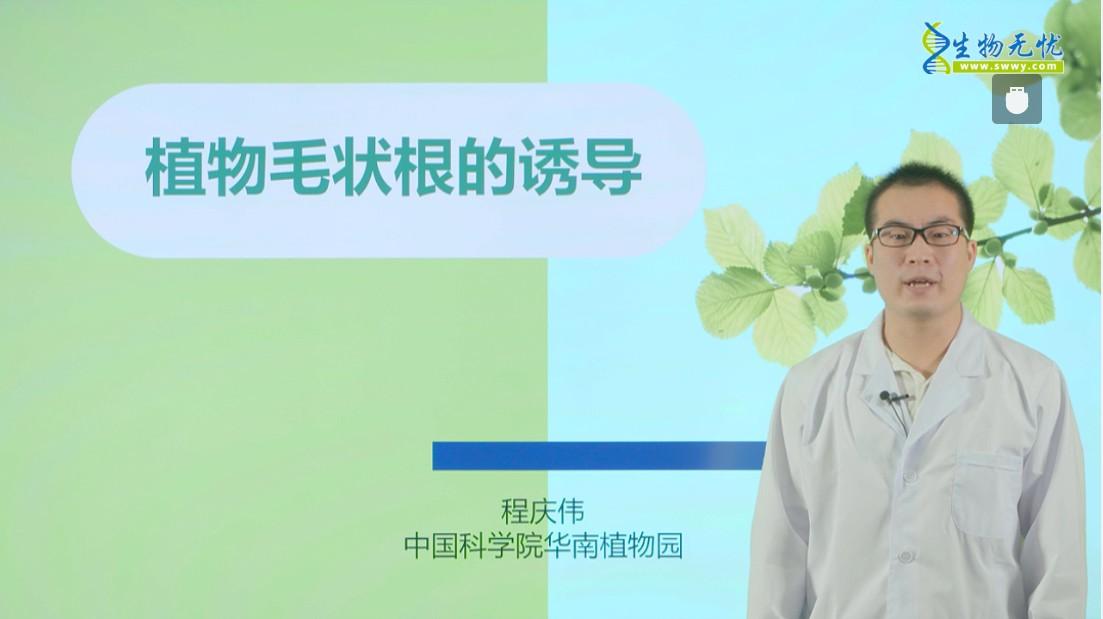 程庆伟:植物毛状根的诱导