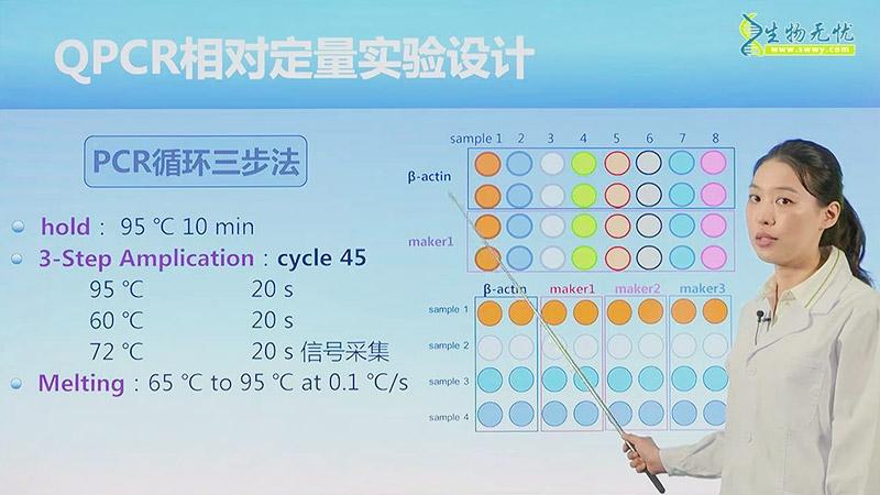 斑马鱼荧光定量pcr技术