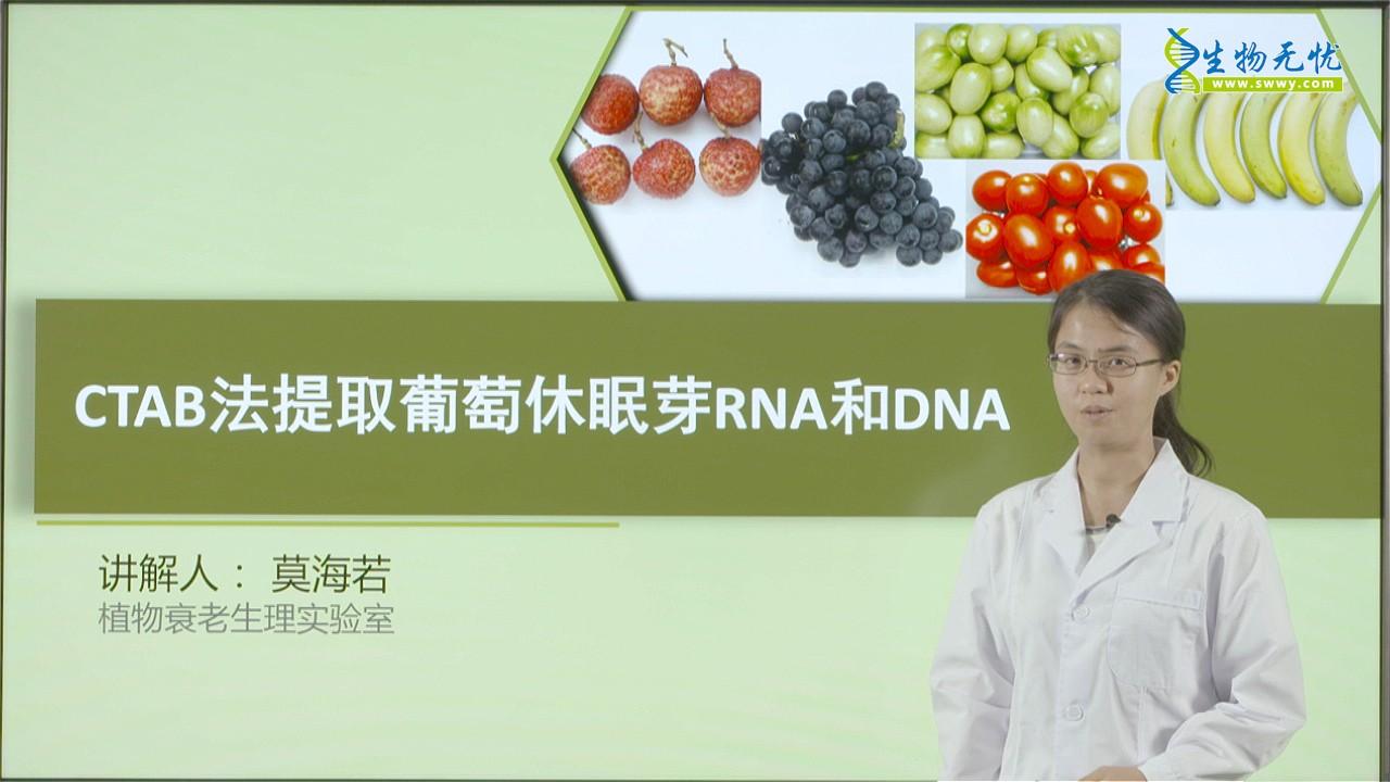 莫海若:CTAB法提取葡萄休眠芽RNA和DNA