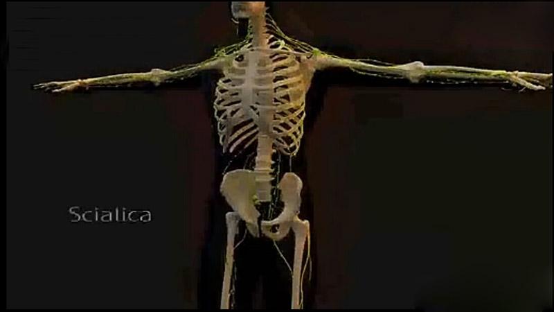 医学动画 脊椎关节炎动画演示
