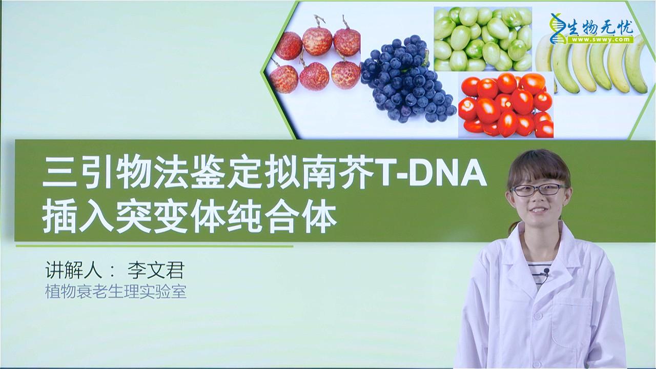 李文君:三引物法鉴定拟南芥T-DNA插入突变体纯合体