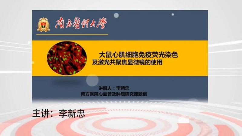 李新忠免疫荧光染色