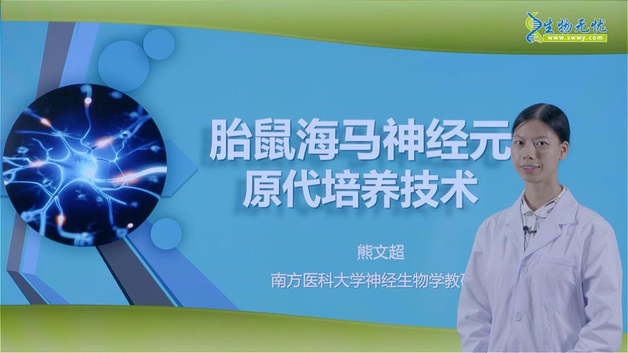 熊文超:胎鼠海马神经元原代培养技术