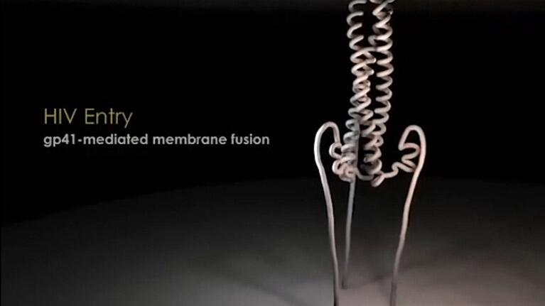 HIV进入gp41介导的膜融合视频