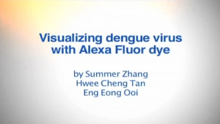 通过Alexa Fluor标签肉眼观察登革病毒视频