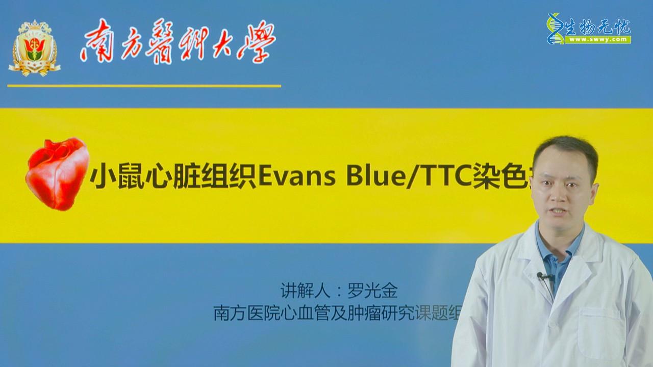 罗光金_小鼠心脏组织Evans Blue/TTC染色技术