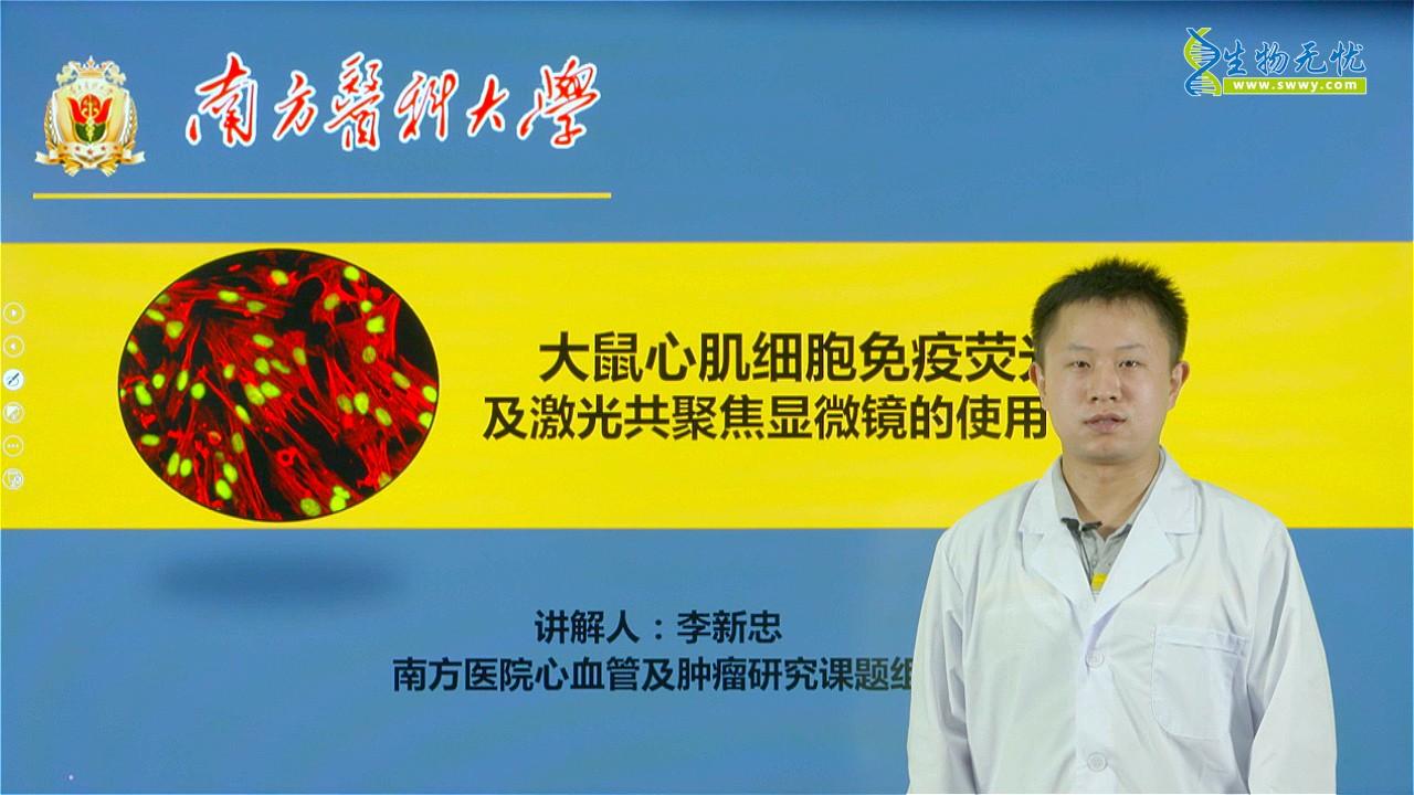 李新忠:大鼠心肌细胞免疫荧光染色及激光共聚焦显微镜的使用