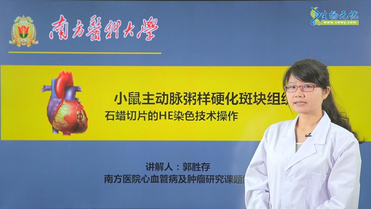 郭胜存:小鼠主动脉粥样硬化斑块组织石蜡切片的HE染色技术操作