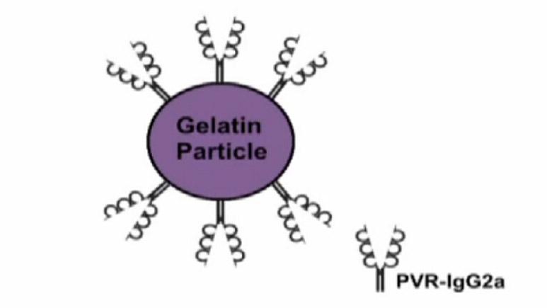 颗粒凝集法鉴定脊髓灰质炎病毒视频