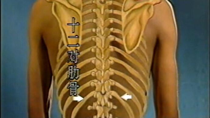 104-胸廓体检