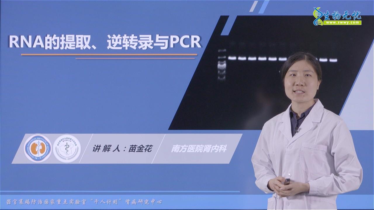 苗金花:RNA的提取、逆转录与PCR
