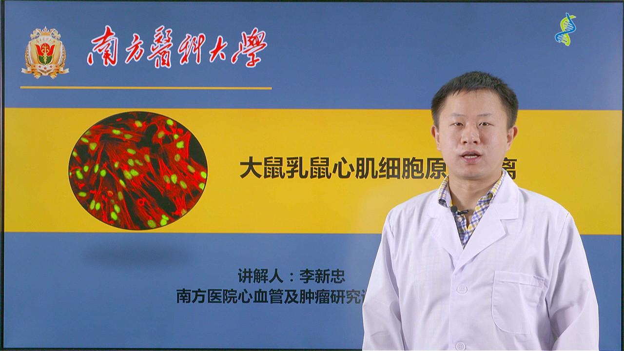 李新忠:大鼠乳鼠心肌细胞原代分离(第1P-总2P)
