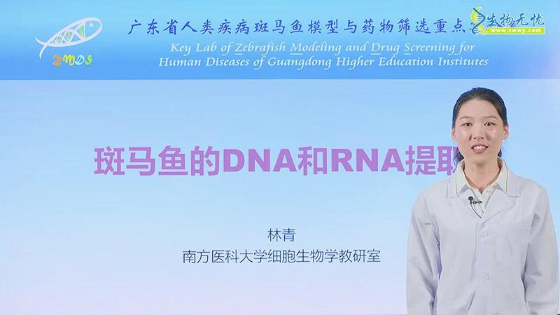 林青:斑马鱼的DNA和RNA提取