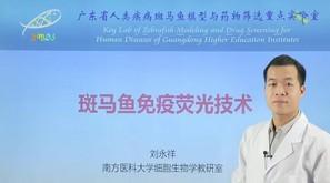 刘永祥:斑马鱼免疫荧光技术