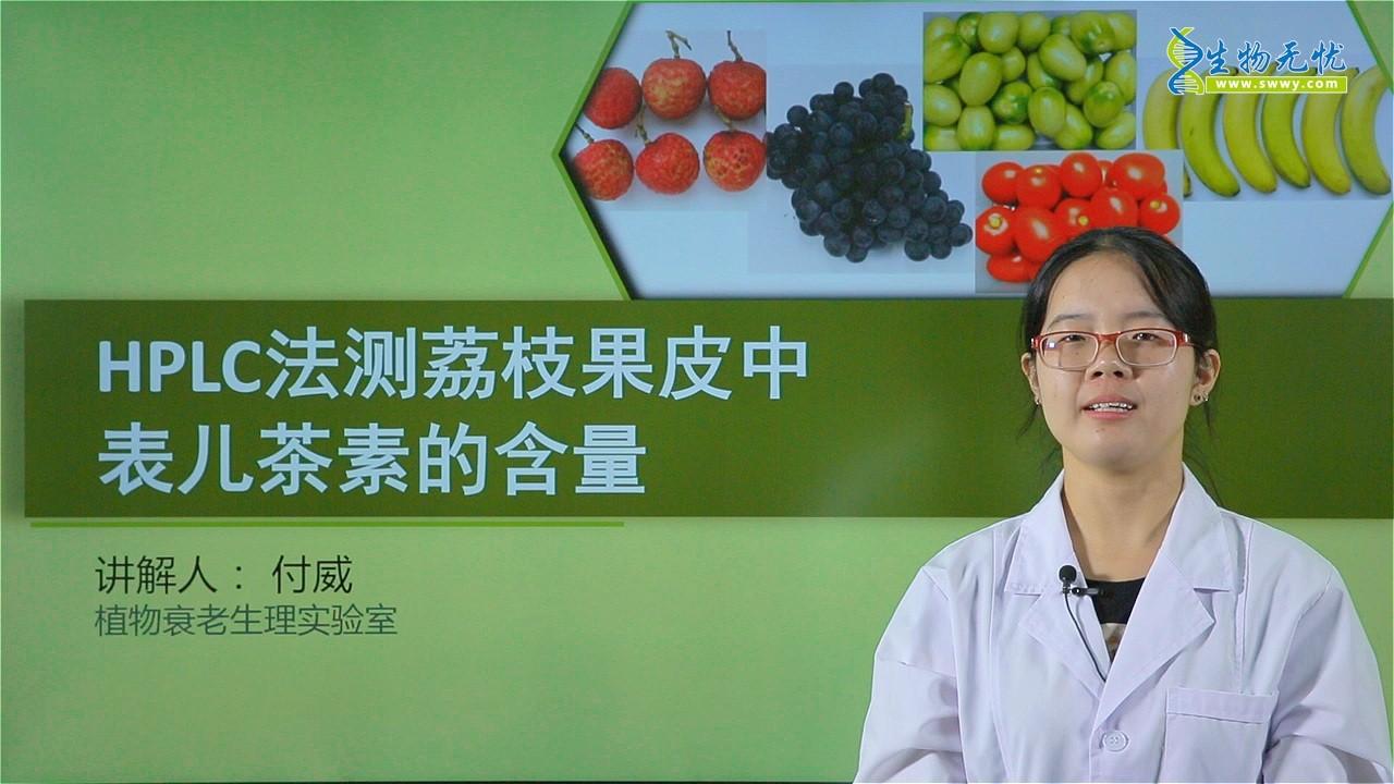 付威:HPLC法测荔枝果皮中表儿茶素的含量_1P