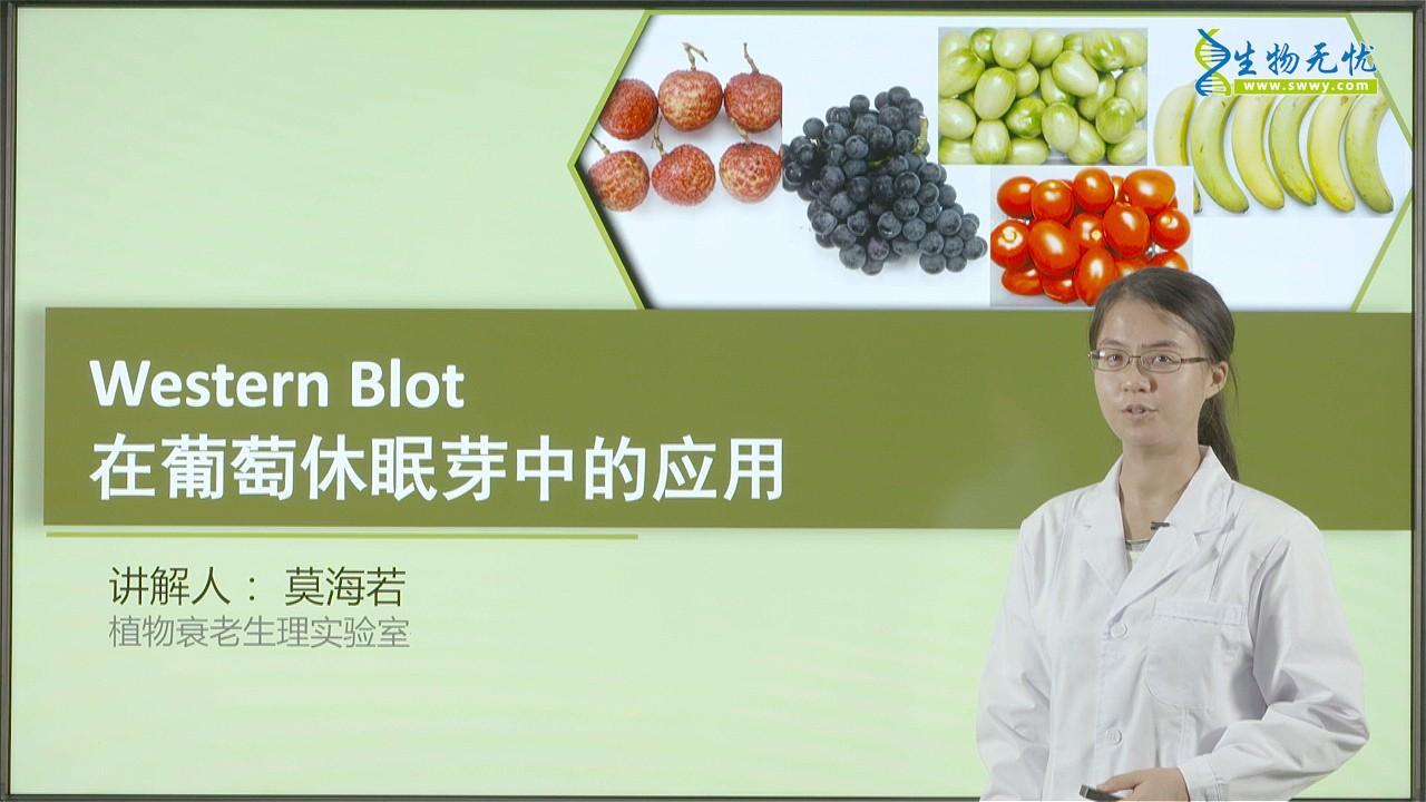 莫海若:Western Blot在葡萄休眠芽中的应用