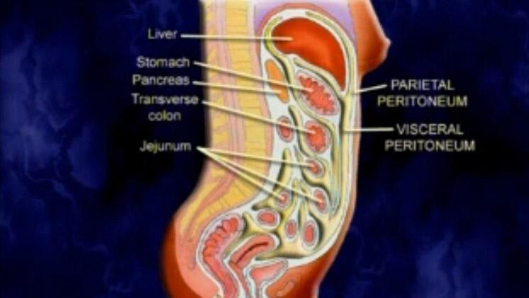 胰脏,肝脏,胆囊的解剖结构