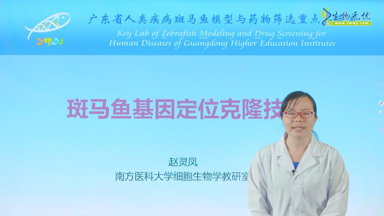 赵灵凤:斑马鱼基因定位克隆技术_1