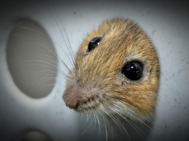 多数动物研究或未采取措施防范偏差